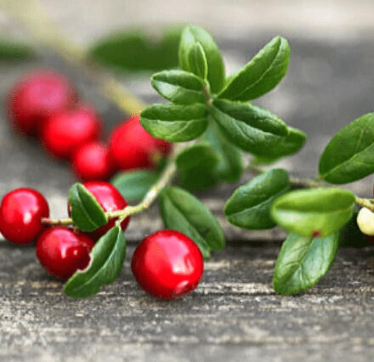 Червените боровинки: защо да си ги похапваме по-често и колко са важни те за нас