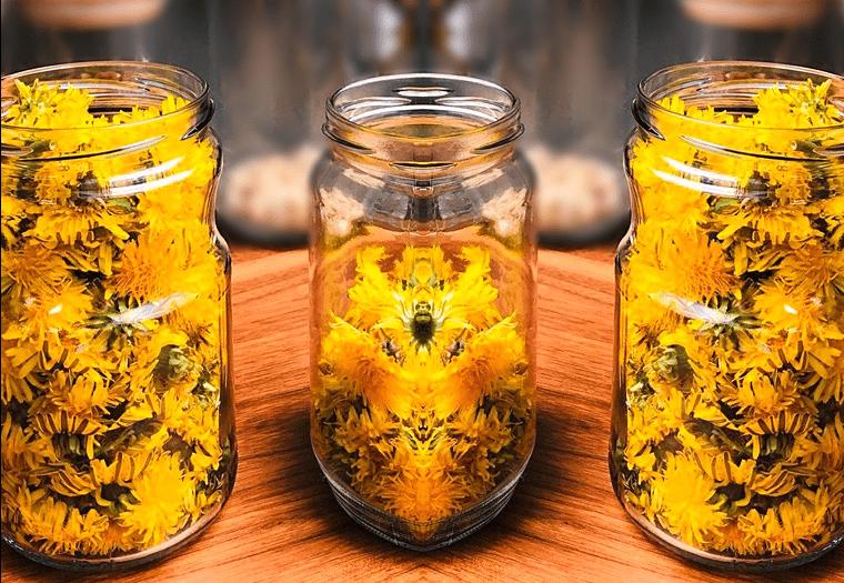 Мед от глухарчета – ценен източник на здраве