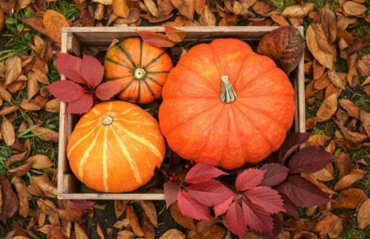 три есенни тикви